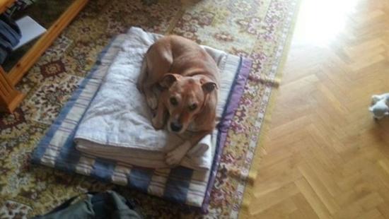 Excalibur, el perro sacrificado por posible contagio de ébola
